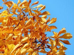 détail en automne